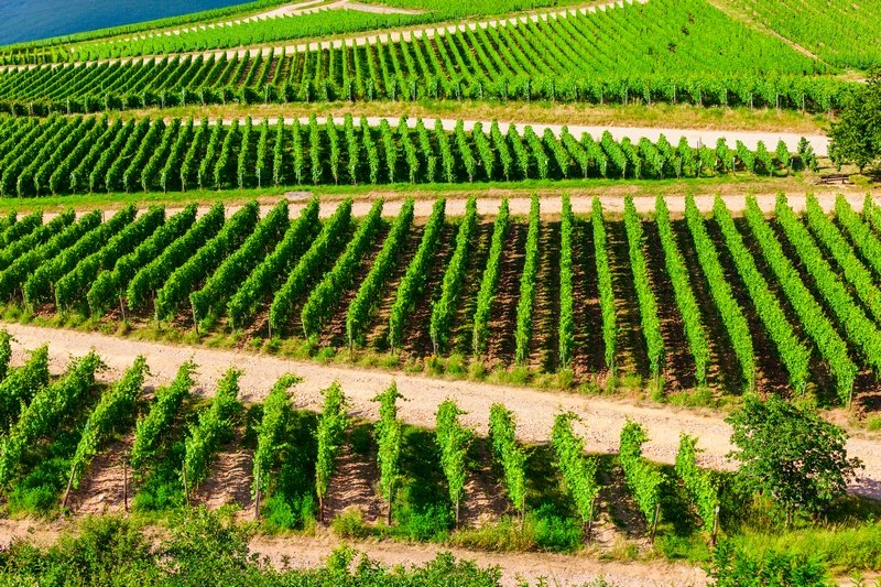 Bingen Germany Rhine Valley vineyards
