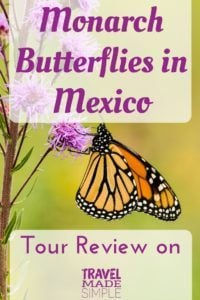 Mexico monarch butterfly tour review